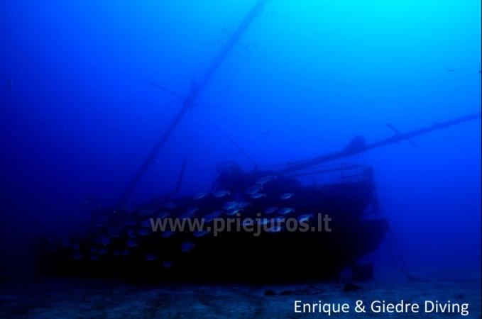 Diving in Tenerife - 11