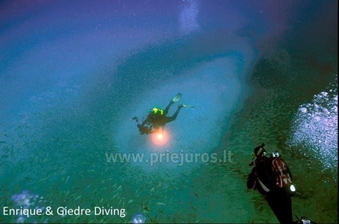 Diving in Tenerife - 12