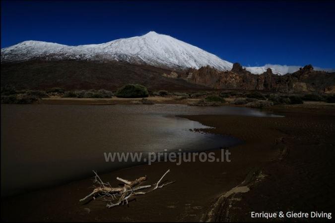 Diving in Tenerife - 13