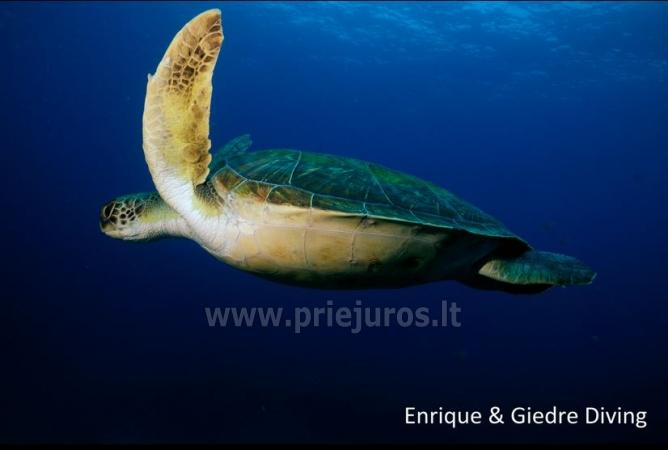 Diving in Tenerife - 14