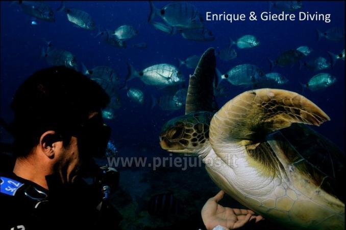 Diving in Tenerife - 15