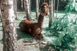Dinosaur Park DINO.LT Radailiai in Radailių dvaras near Klaipeda