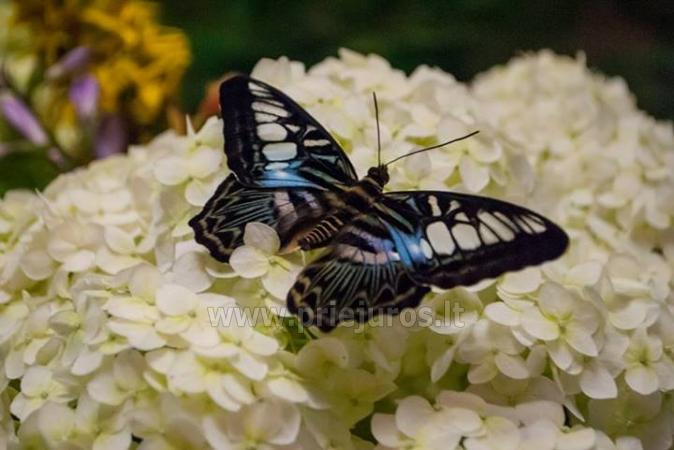 Exhibition of live tropical butterfly - 2