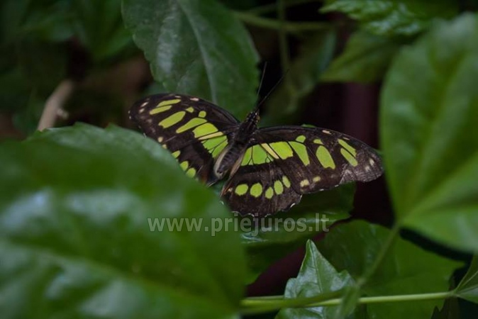 Exhibition of live tropical butterfly - 3