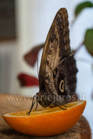 Exhibition of live tropical butterfly - 5