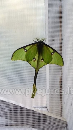 Exhibition of live tropical butterfly - 1