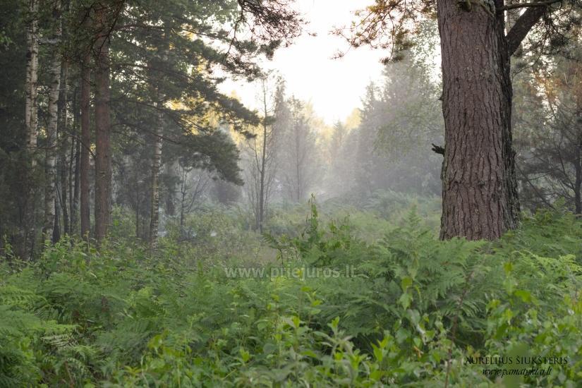 Ekskursijas mežā - 3