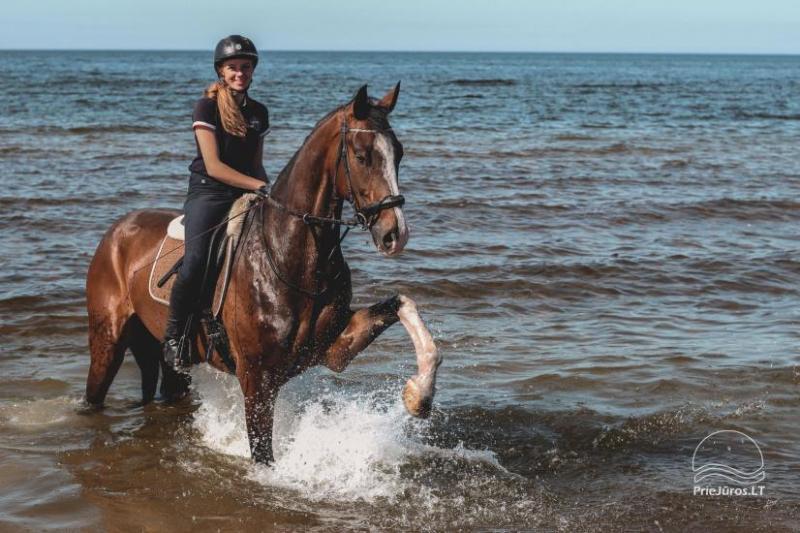 Pramogos su žirgais prie atostogų parko
