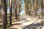 """Zalia kopa"" apartment located just 300 meters to the beach and pine forest! - 37"