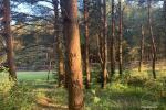 Apartment for rent in Palanga near the sea - 2
