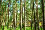 Деревянные домики в сосновом лесу и возле церкви в Швянтойи - 1