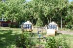 Holiday cottage in Nida on the shore of Curonian lagoon, Nagliu street, in Nida - 5