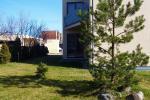2-istabu dzīvoklis Palangas centrā, Kretingos 11-1 - 2